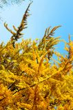 Autumn foliage in a city park. Some yellow  and green leaves Royalty Free Stock Photo