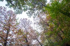 Autumn foliage in a city park. Some yellow  and green leaves Stock Image