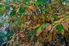 Autumn foliage in a city park. Some yellow  and green leaves Stock Images