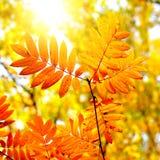 Autumn Foliage closeup Stock Photography
