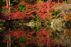 Autumn foliage color with water reflection Royalty Free Stock Photography