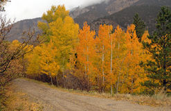 Autumn Foliage Colorado Rockies Royaltyfri Foto