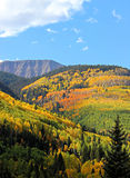 Autumn foliage in Colorful Colorado. The many contrasting layers of Autumn Aspens and Evergreens decorate the slopes of the San Juan Mountain range in Southwest Royalty Free Stock Image