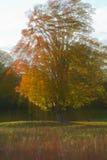 Autumn Foliage. Colorful autumn foliage with sunbeam Royalty Free Stock Photography