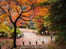 Autumn foliage colorful trees, Arashiyama, Kyoto. Autumn foliage colorful trees on Arashiyama mountain footpath to access to the peak viewpoint in Kyoto, Japan Stock Photo