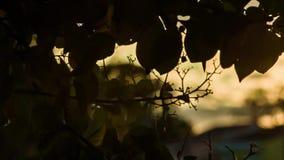 Autumn Foliage at sunset 3 stock footage