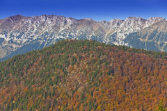 Autumn foliage and deep blue sky in the mountains Stock Photography