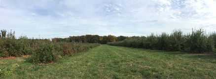 Apple Orchard Panorama Stock Photo