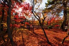 Autumn foliage in Eikando, Kyoto. Autumn foliage against sunbeam at Eikando Temple in Kyoto, Japan Stock Photography