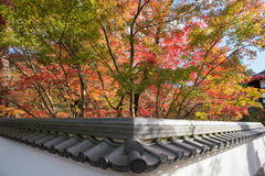 Autumn foliage at Eikando Temple Royalty Free Stock Image