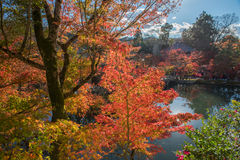 Autumn foliage at Eikando Temple Royalty Free Stock Photos
