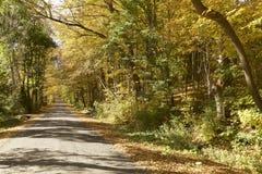Autumn Foliage em Vermont imagens de stock