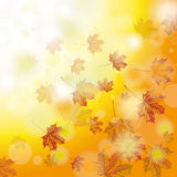 Autumn Foliage Fall Photo stock