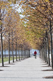 Autumn foliage, Fall colors in Four Freedoms Park, New York City Stock Image