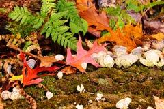 Autumn Foliage Royalty Free Stock Photos