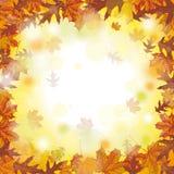 Autumn Foliage Fall extérieur Images libres de droits