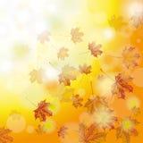 Autumn Foliage Fall Stock Photo