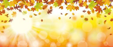 Autumn Foliage Fall Sunlights Header-Zonnestraal Royalty-vrije Stock Afbeeldingen