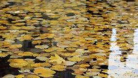 Autumn Foliage Floating stock videobeelden