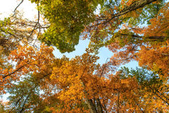 Autumn foliage in the forest Royalty Free Stock Photography