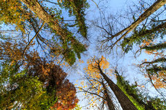 Autumn foliage in the forest Stock Photos