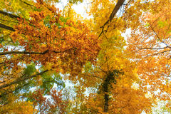 Autumn foliage in the forest Stock Image