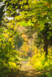 Autumn foliage in the forest Royalty Free Stock Photos