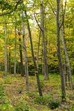 Autumn foliage. In a forest filled with trees Stock Images