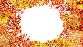 Autumn foliage frame , isolated on white background. Various Colorful Fall leaves stock photography
