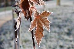 Autumn foliage frosty morning Royalty Free Stock Photography