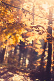 Autumn foliage Stock Photography