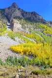 Autumn Foliage with Golden Yellow Aspen Royalty Free Stock Photography