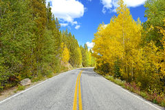 Autumn Foliage with Golden Yellow Aspen Stock Photos
