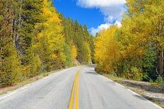 Autumn Foliage with Golden Yellow Aspen Royalty Free Stock Photo