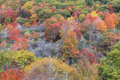 Autumn Foliage at Graveyard Fields Royalty Free Stock Images