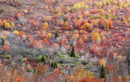 Autumn Foliage at Graveyard Fields Royalty Free Stock Photography