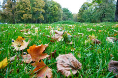 Autumn foliage in green grass Stock Photography