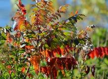 Autumn Foliage Highlights brillante foto de archivo