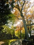 Autumn Foliage on a hill with pathway. Sun shining through the fall leaves on a sunny november afternoon Royalty Free Stock Photography