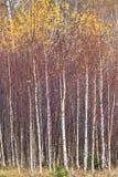 Autumn Foliage In The Mountains Stock Photos
