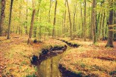 Free Autumn Foliage In The Wood Royalty Free Stock Photos - 193872838