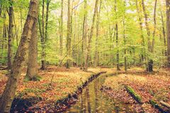 Free Autumn Foliage In The Wood Stock Photography - 193872872