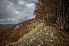 Autumn foliage on the Italian mountains stock images