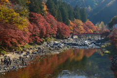 Autumn foliage in Korankei, Aichi, Japan Royalty Free Stock Images