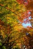 Autumn foliage in Korankei, Aichi, Japan Royalty Free Stock Image