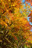 Autumn foliage in Korankei, Aichi, Japan Royalty Free Stock Photography