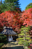 Autumn foliage in Korankei, Aichi, Japan Royalty Free Stock Images