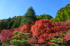 Autumn foliage in Korankei, Aichi, Japan Stock Photo