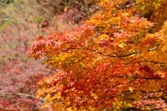 Autumn foliage in Korankei, Aichi, Japan Stock Images