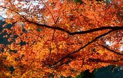 Autumn foliage in Korankei, Aichi, Japan Royalty Free Stock Photos